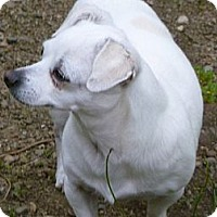Adopt A Pet :: Bunny Adopted - Nine Mile Falls, WA