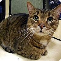 Adopt A Pet :: Rooster - Alexandria, VA