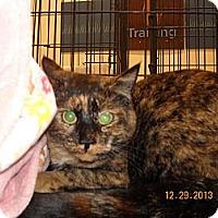 Adopt A Pet :: Penelope - Riverside, RI