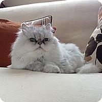 Adopt A Pet :: Zoe - Bonita Springs, FL