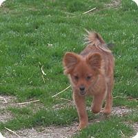 Adopt A Pet :: Sinclair - Clarksville, TN
