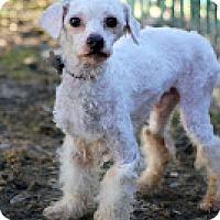 Adopt A Pet :: Rizzo - Tinton Falls, NJ