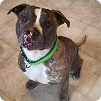 Adopt A Pet :: Presley - Dayton, OH