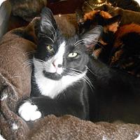 Adopt A Pet :: Squirt - Richland, MI
