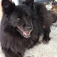 Adopt A Pet :: Dorie - Ocean Ridge, FL