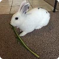 Adopt A Pet :: Patch - Woburn, MA