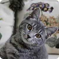 Adopt A Pet :: Charm - Potomac, MD