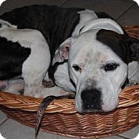 Adopt A Pet :: Alfredo - Salem, NH