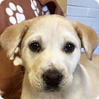 Adopt A Pet :: Satin - Charlemont, MA