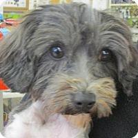 Adopt A Pet :: Kale - Rocky Mount, NC
