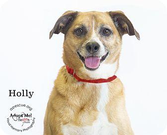 Beagle Mix Dog for adoption in Phoenix, Arizona - Holly