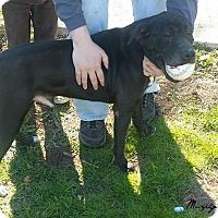 Adopt A Pet :: Murphy - Davenport, IA