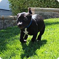 Adopt A Pet :: Skippy Jon - Las Vegas, NV