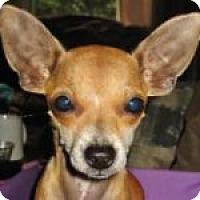 Adopt A Pet :: Lily - Medford, MA