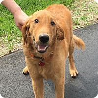 Adopt A Pet :: Buddy 690 - Naples, FL