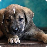 Adopt A Pet :: Justin - Waldorf, MD