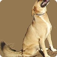 Adopt A Pet :: Skippy - San Ysidro, CA
