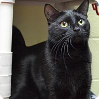 Adopt A Pet :: Missy - Wheaton, IL