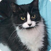 Adopt A Pet :: Sylvie - Elmwood Park, NJ