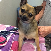 Adopt A Pet :: Loki - Oak Ridge, NJ