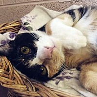 Adopt A Pet :: Arista - Phoenix, AZ