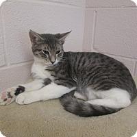 Adopt A Pet :: Earl - Gadsden, AL
