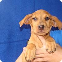 Adopt A Pet :: Kaa - Oviedo, FL