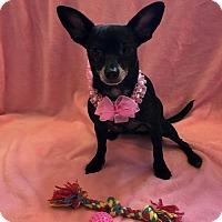 Adopt A Pet :: Delirious - Atlanta, GA