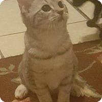 Adopt A Pet :: Jillian - Griffin, GA