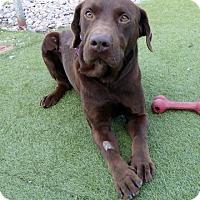 Adopt A Pet :: Hunter #6 - Midlothian, VA