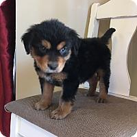 Adopt A Pet :: Rufus - Woodstock, GA