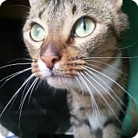 Adopt A Pet :: OTIS - Ocala, FL