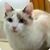 Adopt A Pet :: Tad Cooper - Troy, MI