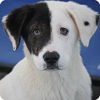 Adopt A Pet :: Lefou Union-Pending Adoption! - Mahwah, NJ