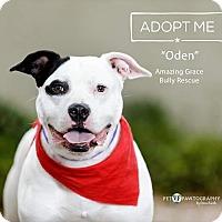 Adopt A Pet :: Oden - Pensacola, FL