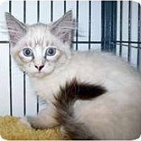 Adopt A Pet :: Singapore - Shelton, WA