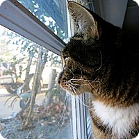 Adopt A Pet :: Kaya - Mission, BC