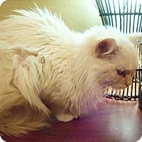 Adopt A Pet :: Kindle - Ennis, TX