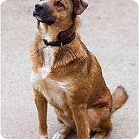 Adopt A Pet :: Benita - Portland, OR
