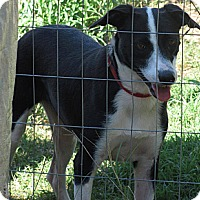 Terrier (Unknown Type, Medium) Mix Dog for adoption in Natchitoches, Louisiana - Bobbi