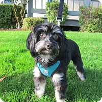 Adopt A Pet :: Lucy - Gig Harbor, WA