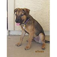 Adopt A Pet :: Porter - Tempe, AZ
