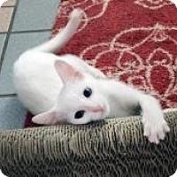 Adopt A Pet :: Chardonnay - Mission Viejo, CA