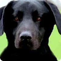 Adopt A Pet :: JEBB(TRAINED-SO SMART! - Wakefield, RI