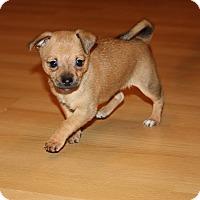 Adopt A Pet :: Wren - Henderson, NV