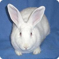 Adopt A Pet :: Peppermint Patty - Woburn, MA