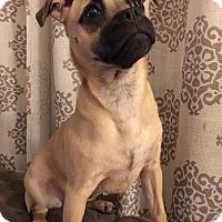 Adopt A Pet :: Polly - Grand Rapids, MI