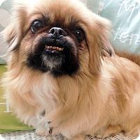 Adopt A Pet :: Rosie - Fennville, MI