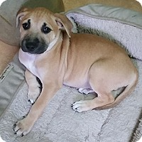 Adopt A Pet :: Johnny - Cincinnati, OH