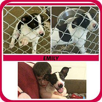 Spaniel (Unknown Type) Mix Puppy for adoption in Malvern, Arkansas - EMILY